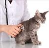 Ветеринарные клиники в Михайловке